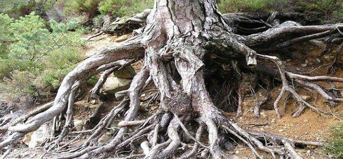 Зри в корень!